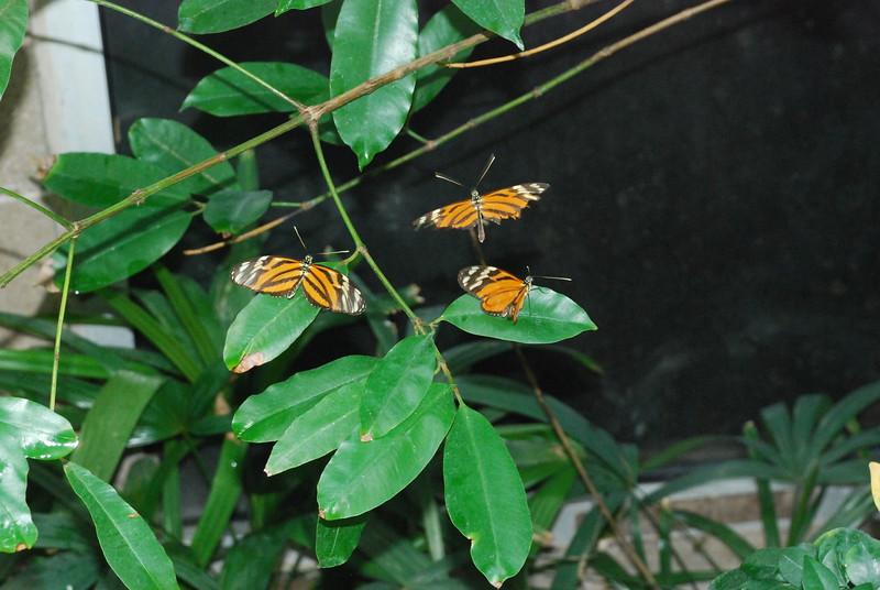 Denver Butterfly Pavilion 2432886460.jpg