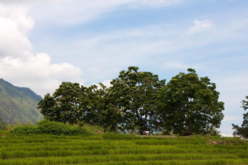 indonesia155.jpg