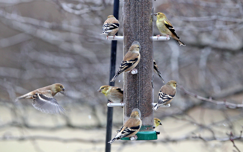 11 20 14 Goldfinch supper_7543.jpg