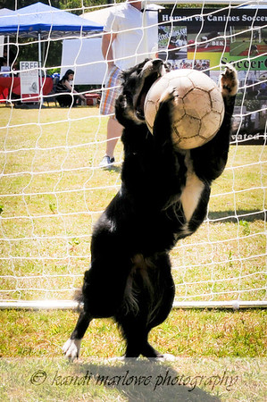 Waterchase Soccer Dog Family Fest