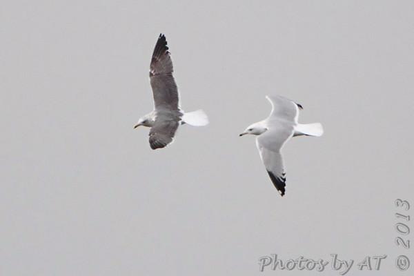 2013-02-20 Riverlands Migratory Bird Sanctuary