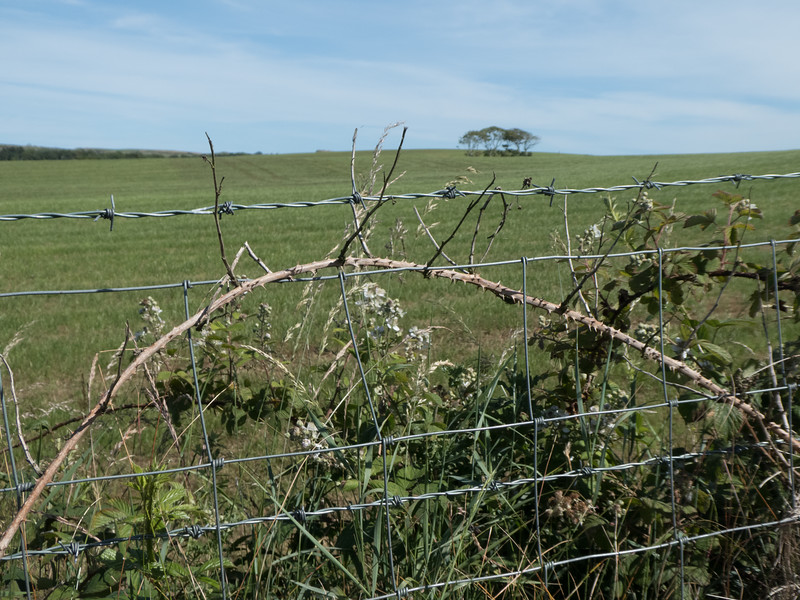 Hedgerow, County Antrim