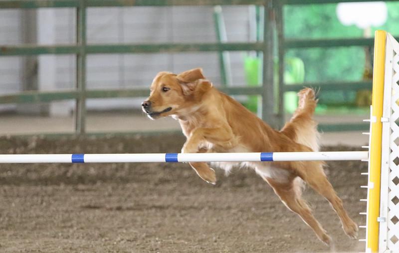 3-10-2019 Bloodhound-0766.jpg