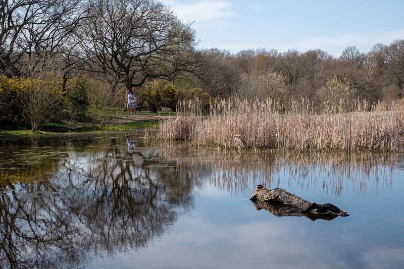Hollow Pond, London, United Kingdom