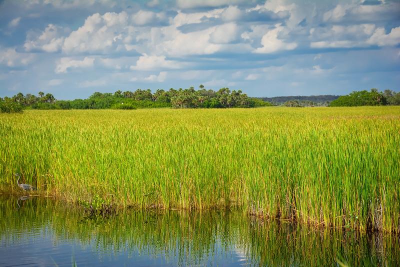 Everglades-47.jpg
