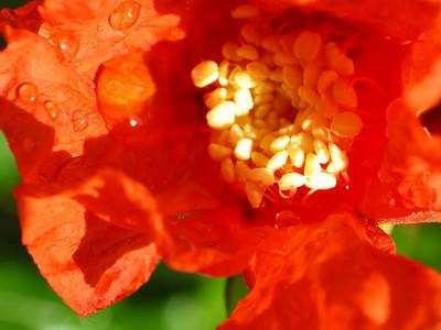 Garden Macros