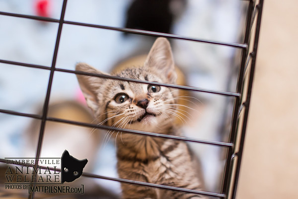 Lambertville Animal Welfare