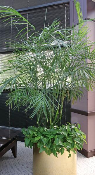Tall_plant.jpg