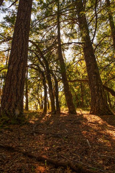 Deep Woods #4