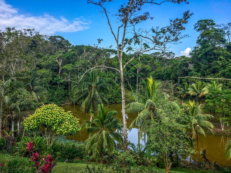 Jungle lagoon, north central Costa Rica
