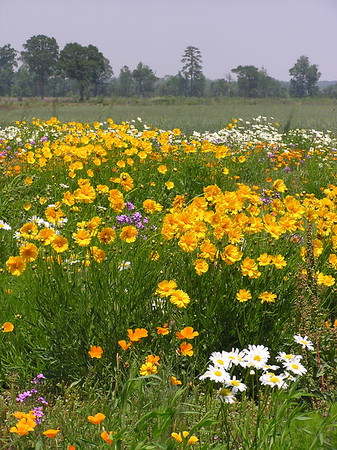 Roadside Flowers Along NC Route 74