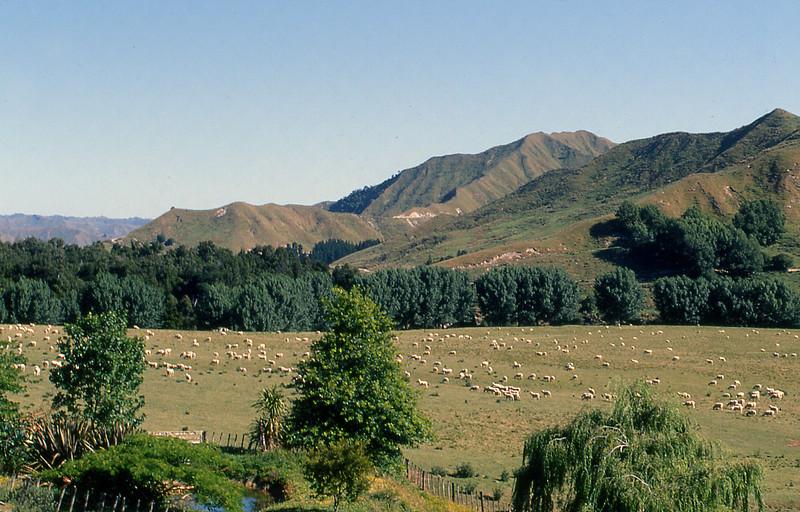 NZ_031.jpg