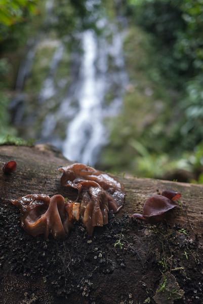 Waterfalls near Silico Creek, Panama.