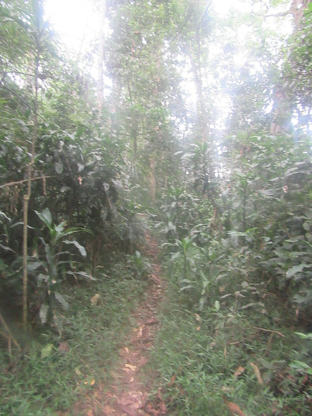 018_Nyungwe National Park.JPG