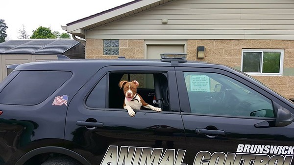Animal Control Officer's gone to the dogs