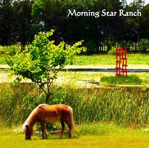 MORNING STAR IN MAY