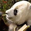 San Diego Zoo39