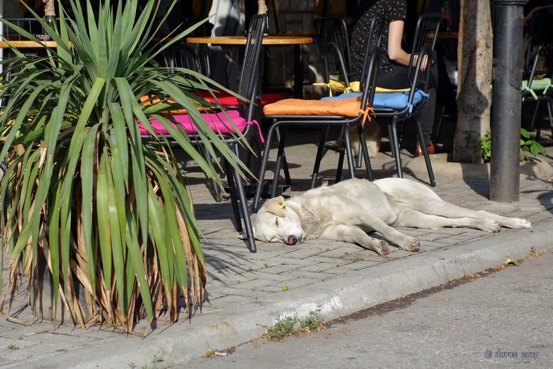 04 Skopje, street dog.jpg