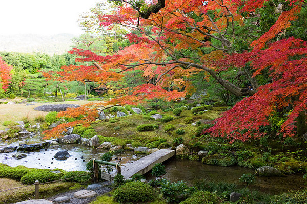 Maple trees (Momiji)
