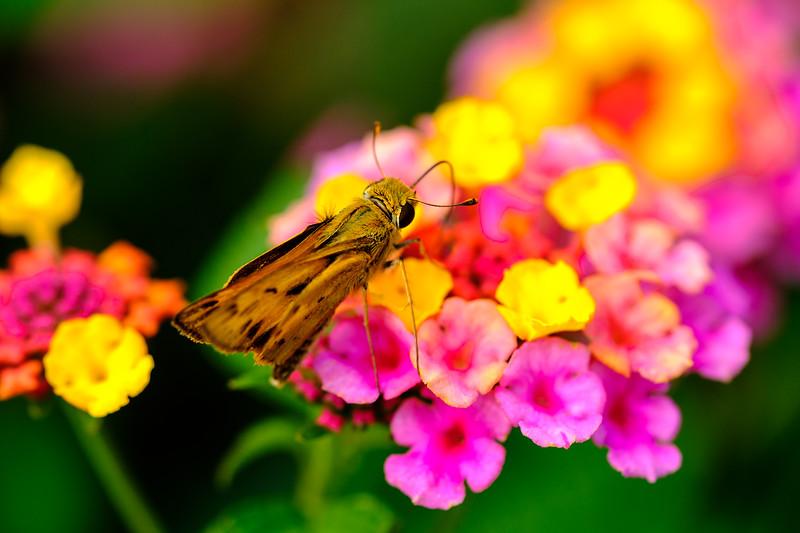 20190917 Green Spring Gardens 026-Enhanced.jpg