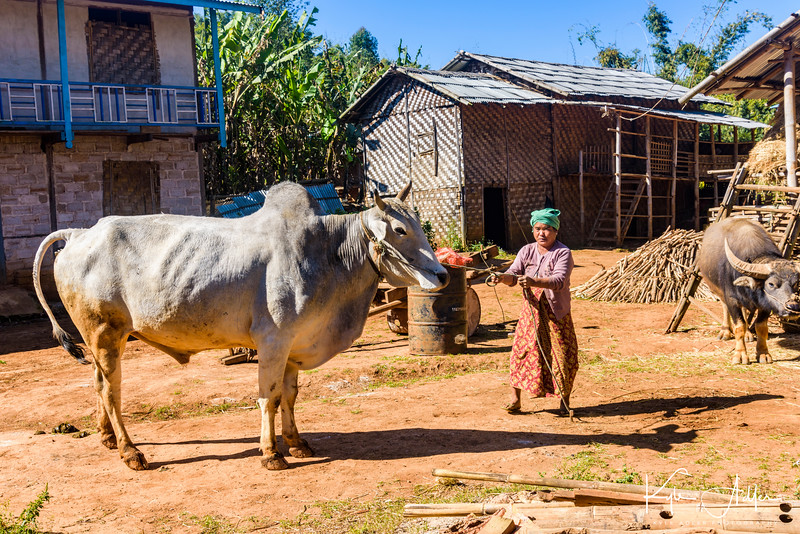 Shortly after arriving in Kalaw on the Shan Plateau in eastern Burma, we hiked to a village inhabited by members of the Pa-O ethnic minority.  The people here were agrarian and rather prosperous.