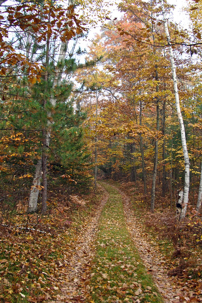 Road Into Camp – Fall | Photo courtesy of Karen Evans