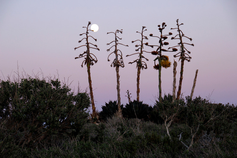 Moon Rise Over Cactus