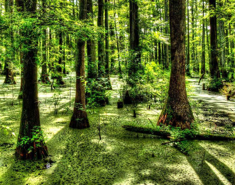 SouthernIllinoisCypressSwampDSC_8228_29_30_tonemapped.jpg