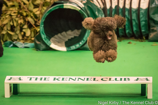 The Kennel Club - Crufts 2016