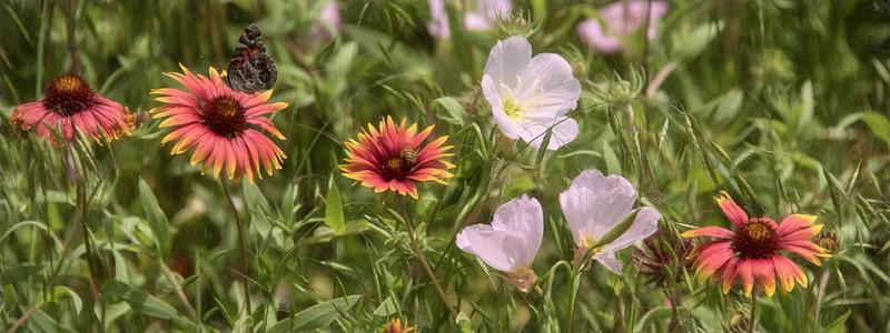 wildflowers042019-2.jpg