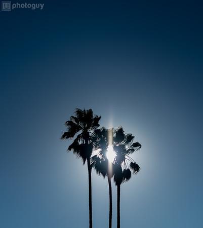 STANFORD UNIVERSITY, PALO ALTO, CA (10 of 10)