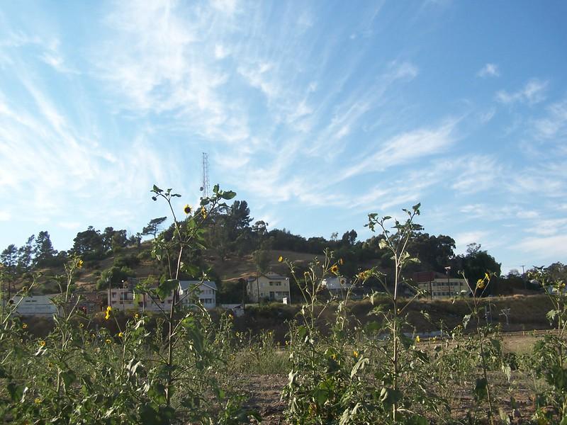 2005-06_LosAngelesStateHistoricPark-Sunflowers04.jpg