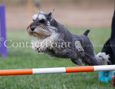Contact Point AKC Agility June 16, 2018