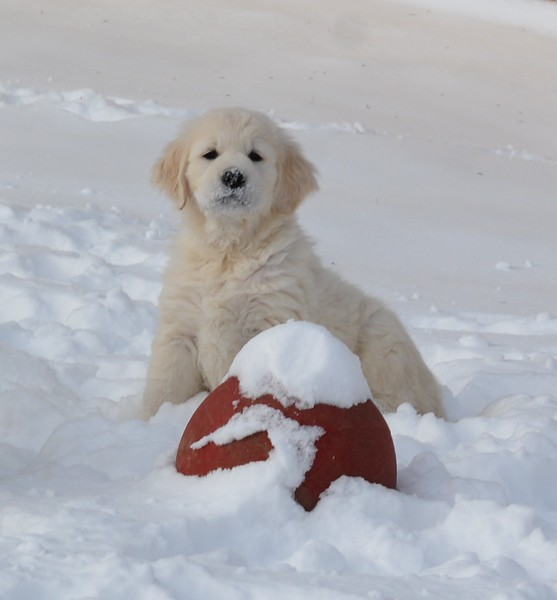 experiencing Snow for the first time