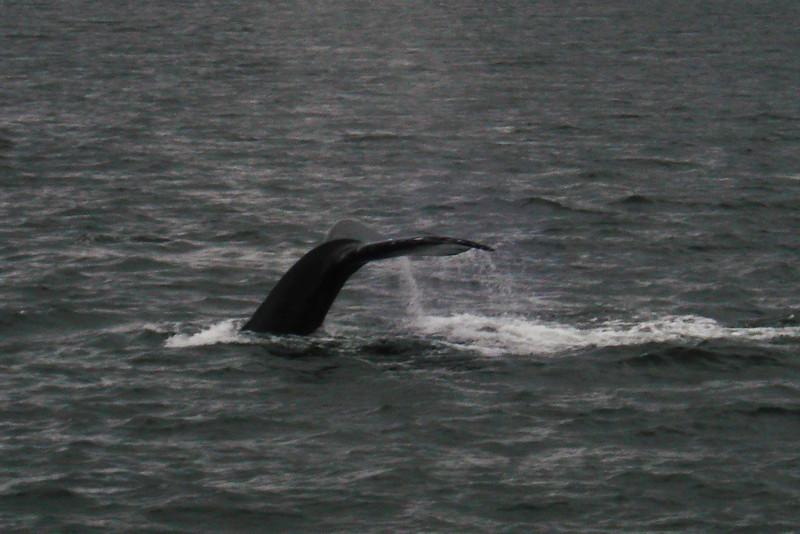 Whale's Tail 2.jpg