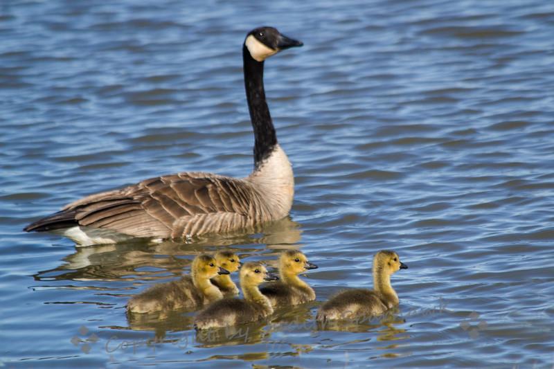 Momma & Kids