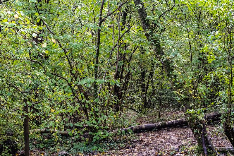 500_Woods-Mill-4017.jpg
