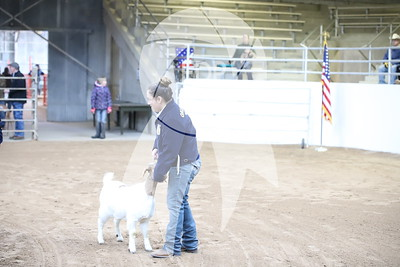 Texas County Jr. Livestock Show