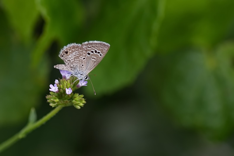 20190619_AnahuacNWR_Butterfly_Garden_small-one_500_8213.jpg