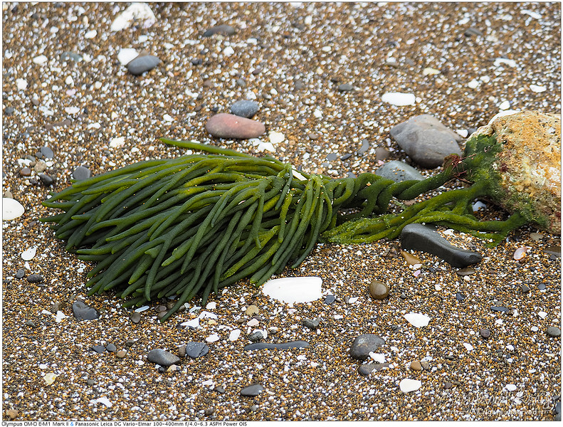 Cute seaweed on the shore