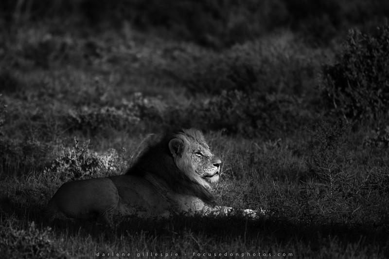 Samburu Sun Spot.jpg
