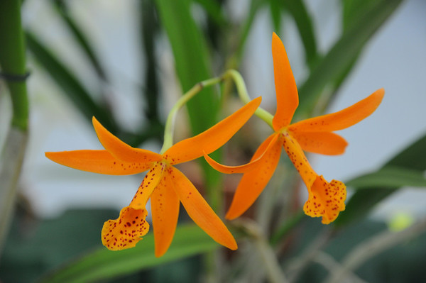 04_Orchid Show