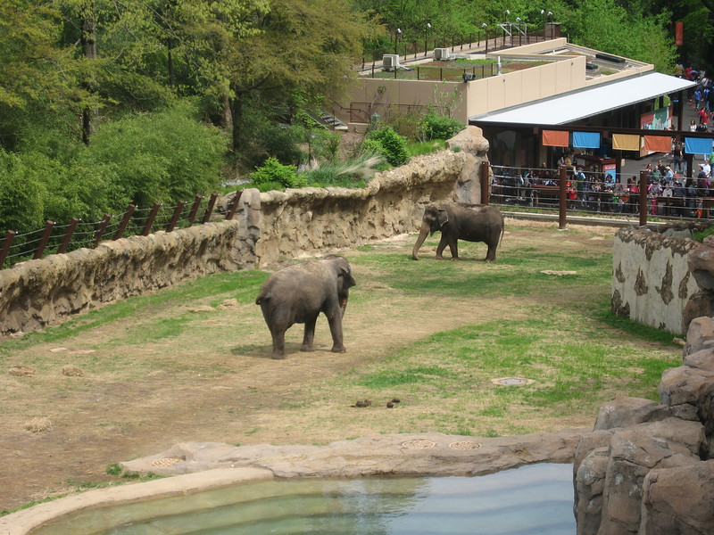 Asian elephants at the Smithsonian's National Zoological Park (4/23/11)