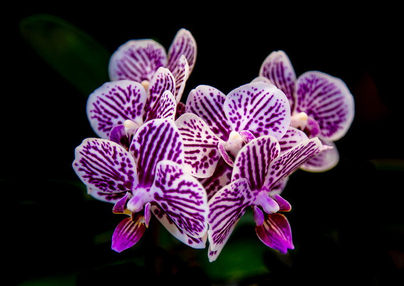 orchid 2020 (2 of 3).jpg