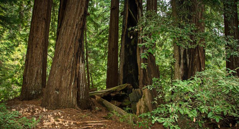 Redwood-6.jpg