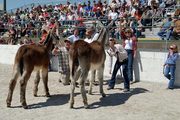 Mule Day 2010