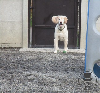 Doggy Daycare - May 2015