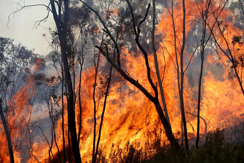 11. Australia Bushfires_14.JPG