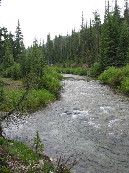 Scapegoat Wilderness, June 2005