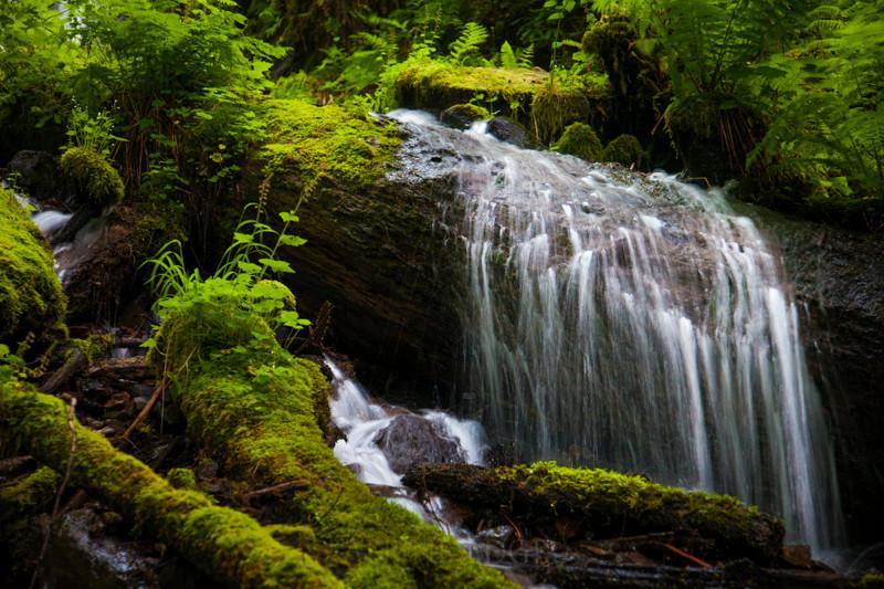 A small waterfall over a fallen tree on Wahkeena Creek